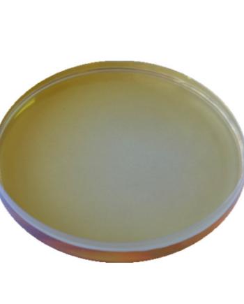 Alfa-acetolattato decarbossilasi per l'industria della birra